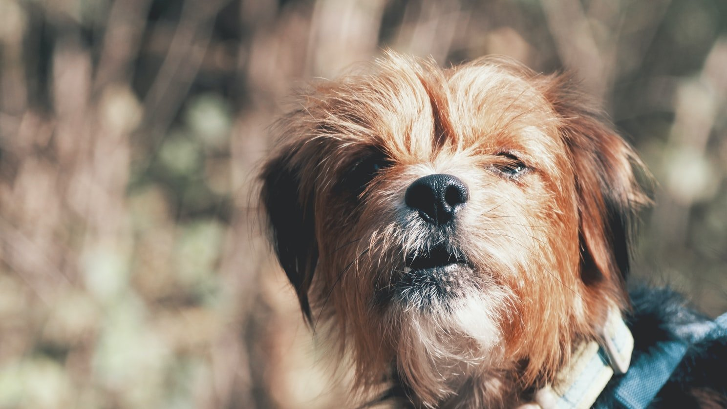 My neighbor had one of those pesky tiny dogs who bark all the time | Source: Unsplash
