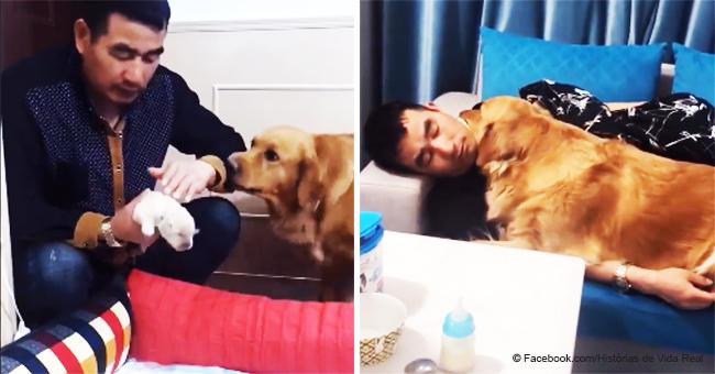 Perra agradece a su dueño con un abrazo por cuidar a sus cachorros