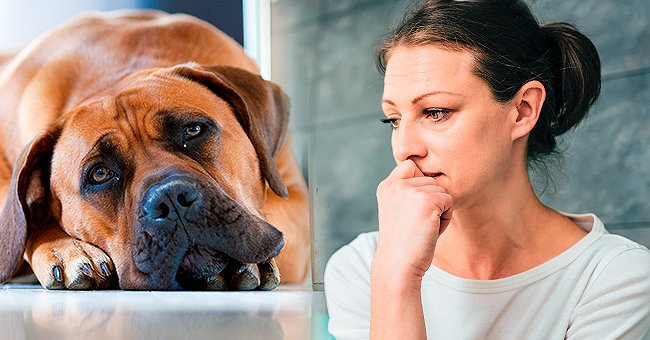 Woman Wants to Get Rid of Her 8-Year-Old Dog after Welcoming a Baby