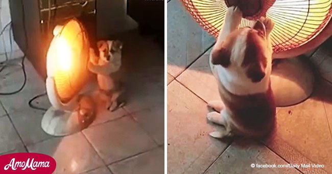 It's so cold outside, even the little puppy wants to get closer to a heater with its tiny paws