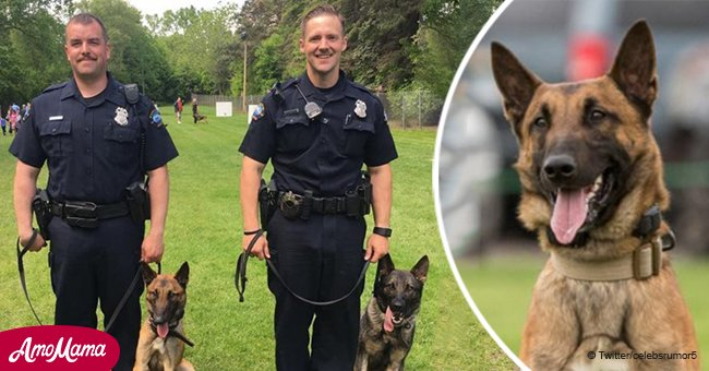 Minnesota officer wounded and K-9 killed during a shoot-out with a suspect