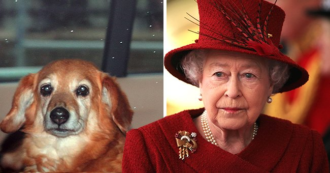 Queen Elizabeth Reportedly Mourns the Loss of Her Beloved Dog Vulcan Ahead of Christmas