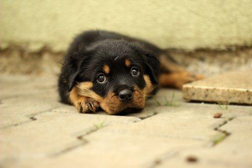 Un chien qui s'allonge dans la rue | Photo : Pixabay