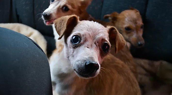 Photo de trois des chiens qui montre les mauvaises conditions dans lesquelles ils viviaent. | Facebook/Tautmilės Prieglaudėlė