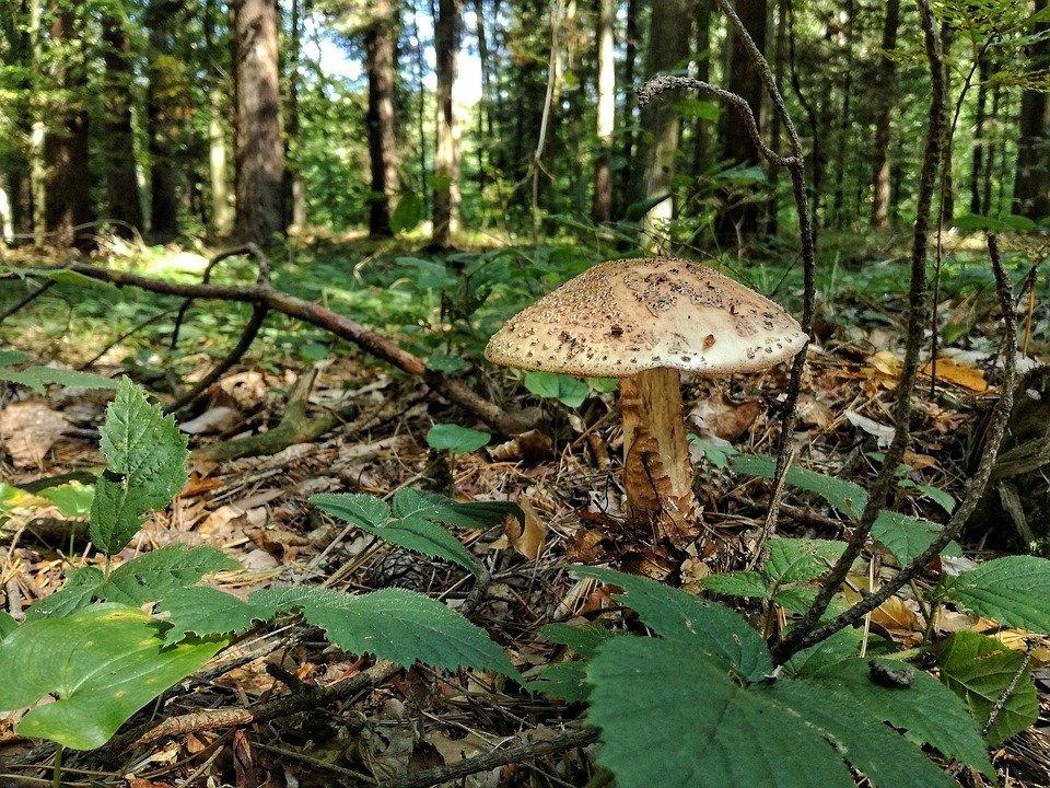 Seta de bosque-Imagen tomada de Pixabay