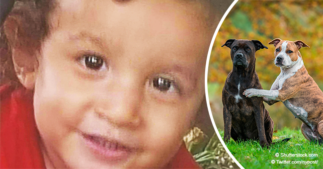'Lovable' Calif. Boy, 2, Mauled to Death by Pair of Rottweilers as Grandparents Tried to Save Him