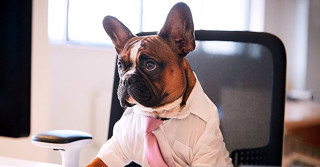 Daily Joke: Clever Dog Applies for Job Vacancy in Office
