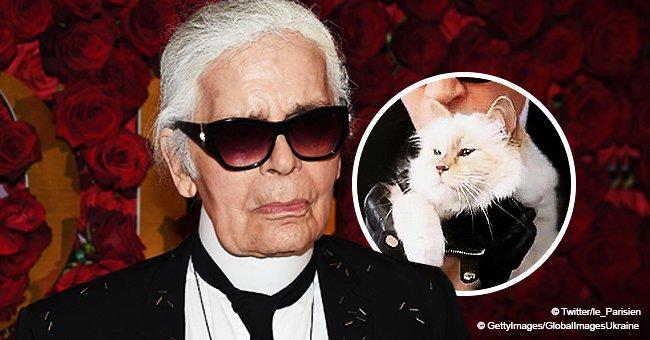 Karl Lagerfeld a nommé son chat Choupette héritière