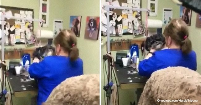 Dog groomer thought nobody was watching and tried to choke an innocent dog