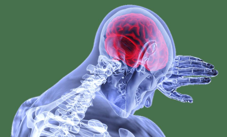 Cervelle | Photo : Pixabay