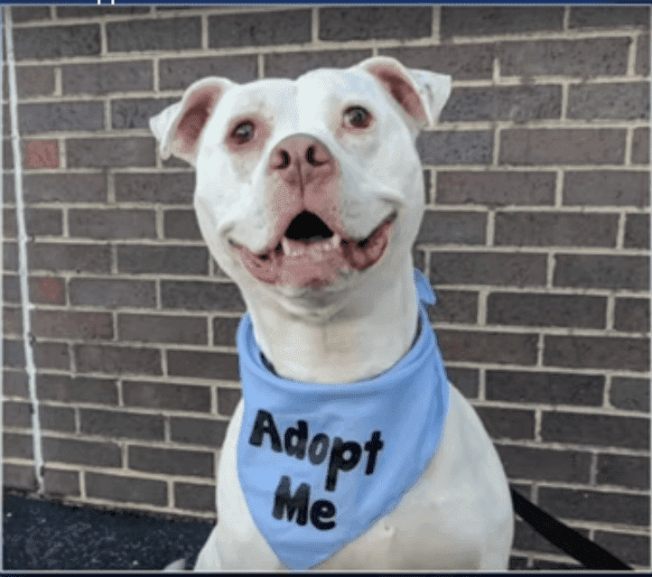 Harvey, a shelter dog who saved three kittens is looking for a new home | Photo: YouTube