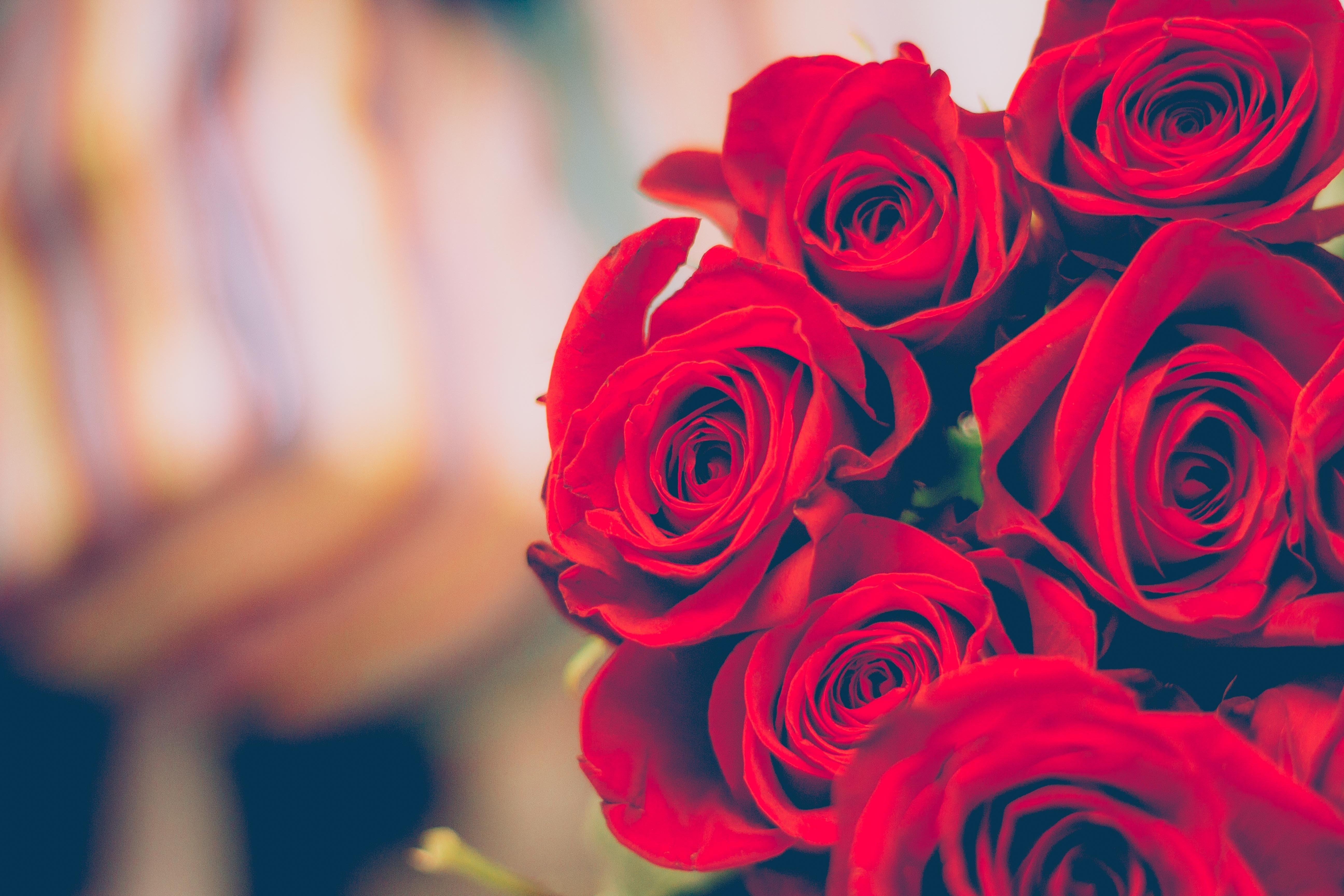 A bunch of roses. | Source: Pexels