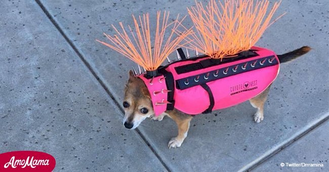 Here's what it means if you see a dog in this crazy looking costume