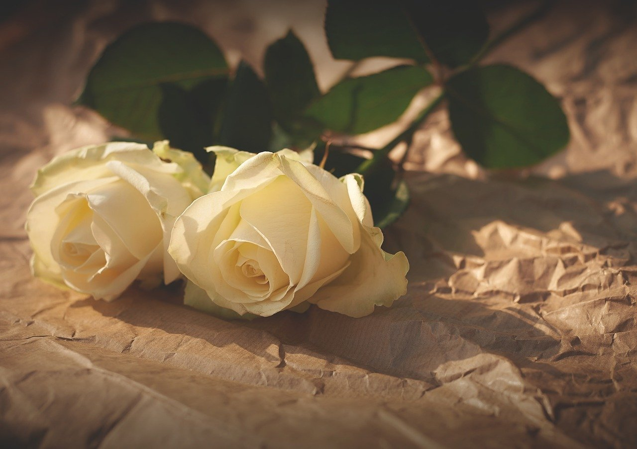 Two white roses laying flat on a paper surface   Photo: Pixabay/Free-Photos
