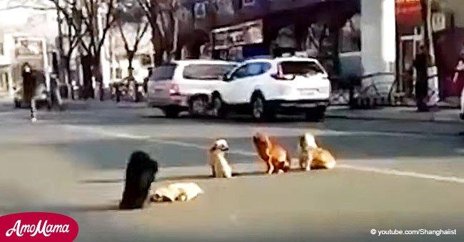 Conmovedor momento en que perros se niegan a dejar el cuerpo de su amigo arrollado por un auto