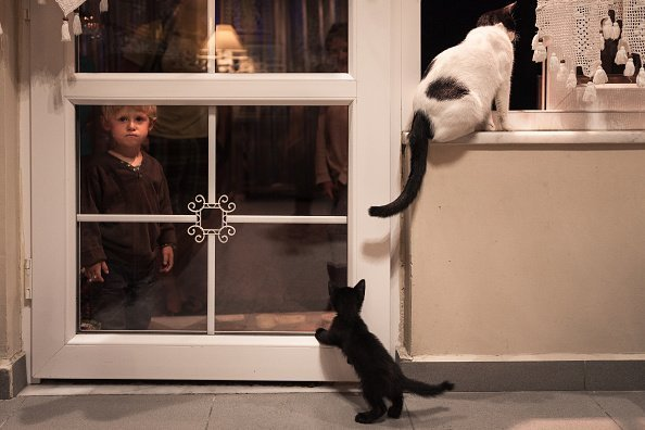 Little boy watching cats and kittens through a glass door in a house of Istanbul, Turkey. | Photo: Getty Images