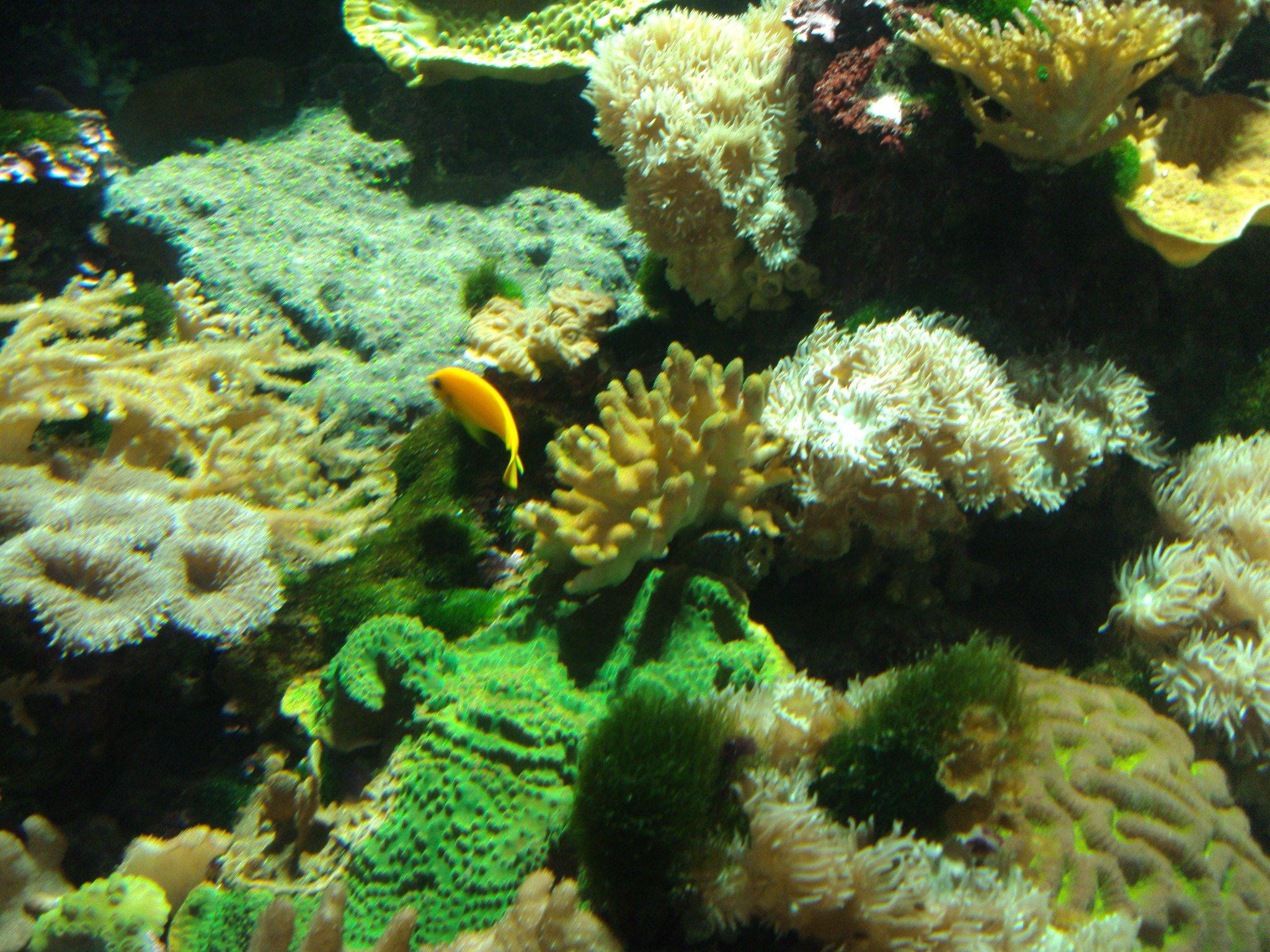 Corales coloridos dentro de una pecera. | Imagen: Flickr