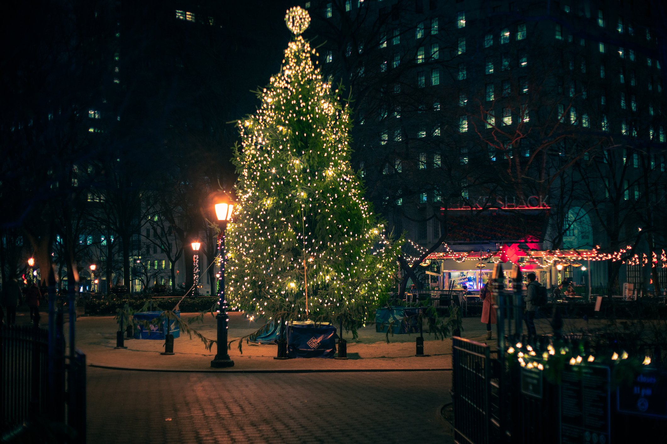 A Christmas tree with lights on display in Manhattan's Madison Square Park at night. | Photo: Getty Images