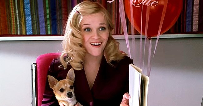 'Legally Blonde' — Quick Facts about the Iconic Comedy Starring Reese Witherspoon