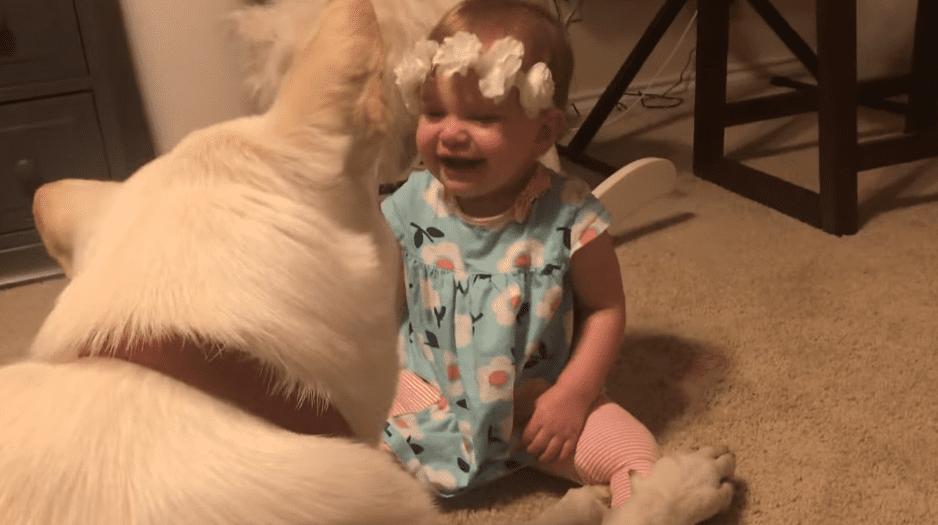Le chien rend des bisous à la petite fille.   Photo : Facebook/ViralHog