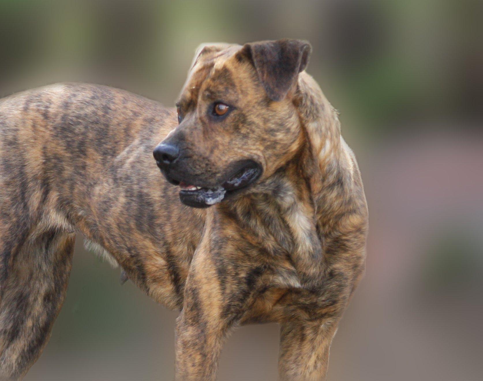 Perro perdido. | Imagen: Wikimedia Commons