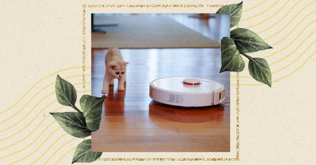A Guide To Keeping Your Home Clean When You Have Pets