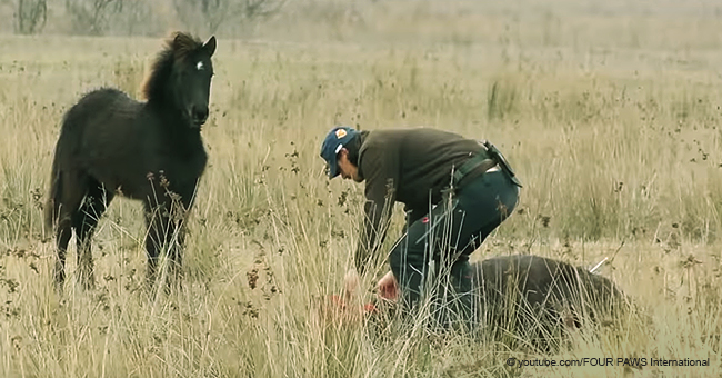 Man Receives Sincere Gratitude From a Wild Horse that He Rescued From Chains