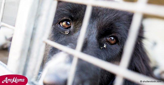 Desgarradores últimos momentos de animales antes de la eutanasia