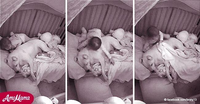 L'adorable vidéo d'une petite fille invitant un pitbull dans son lit après de terribles tremblements de terre