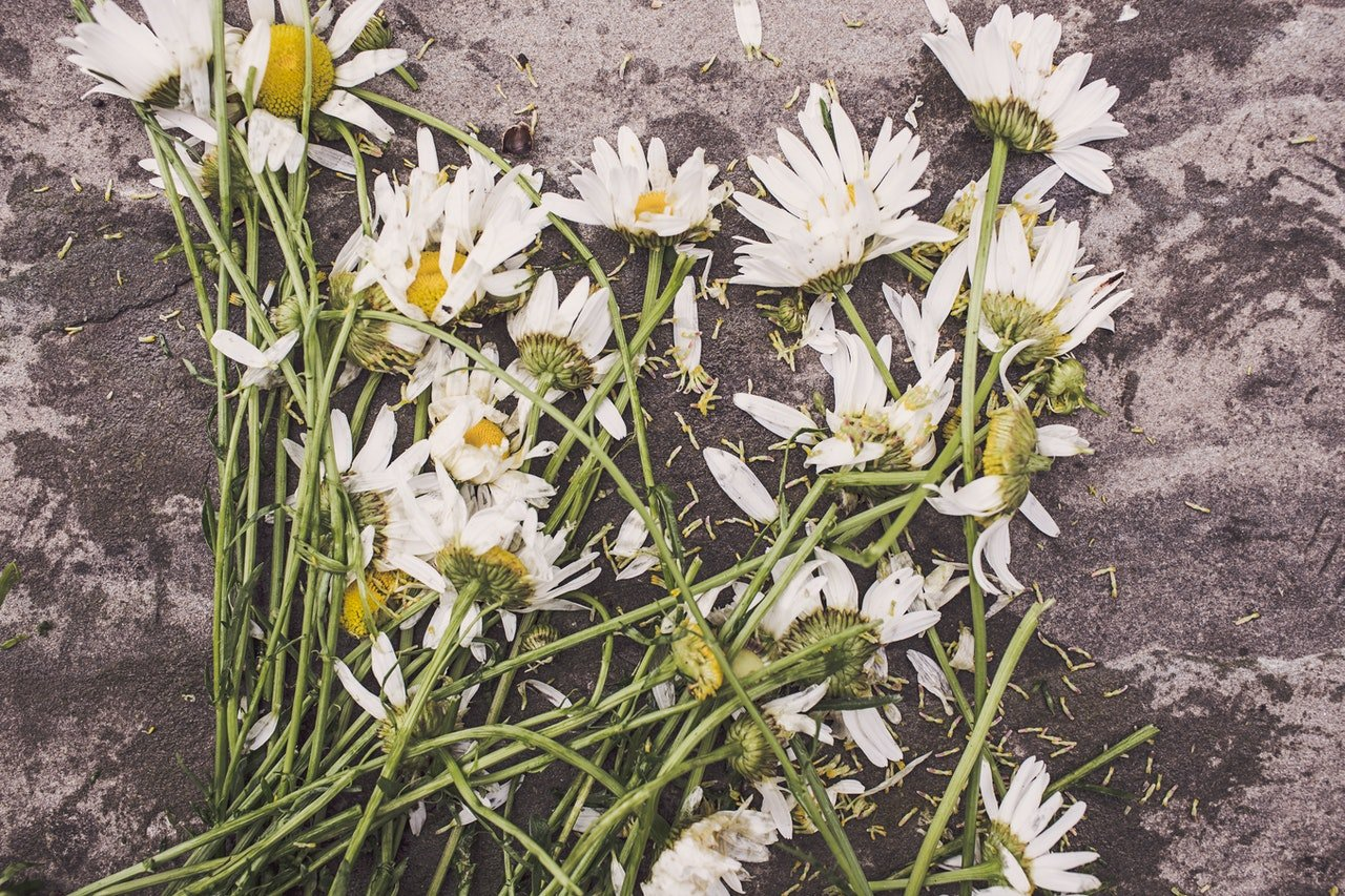 White flowers on the ground   Source: Pexels
