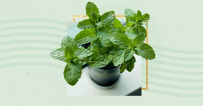 5 Easiest Herbs To Grow In Your Kitchen