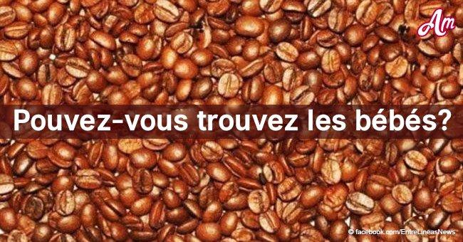 Un défi visuel: Il y a 3 bébés et 3 coccinelles dans les grains de café, pouvez-vous les trouver?
