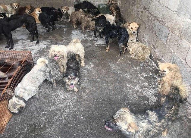 Los perros estaban en muy malas condiciones. | Foto: HSUS