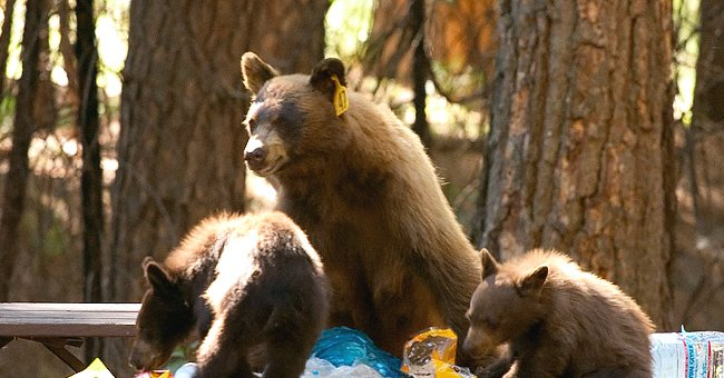 Bear Cub Is Killed by a Car, Park Ranger Shares Emotional Plea to Visitors