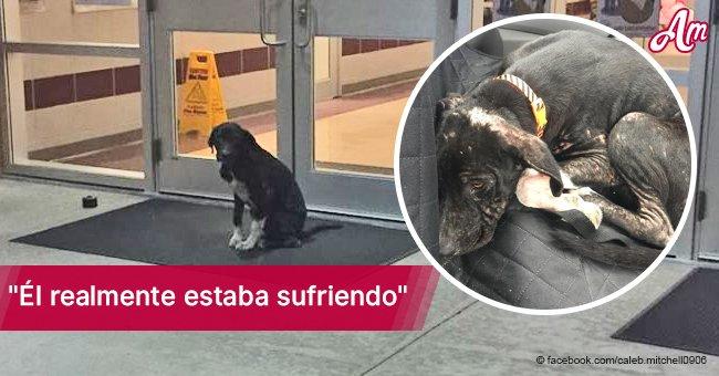Perrito desamparado suplicaba frente a portón de escuela hasta que héroe dio un paso adelante