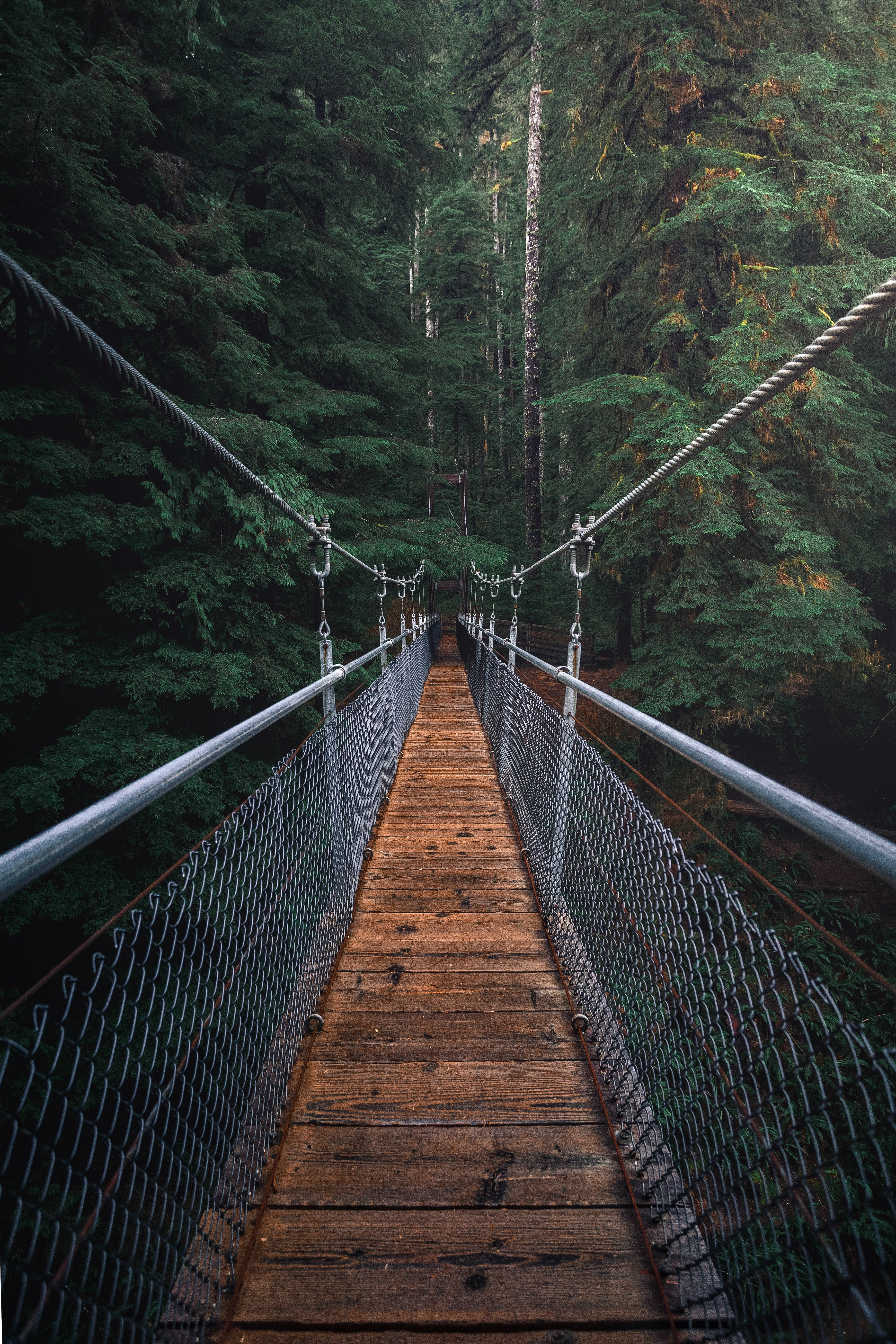 Pictured - An image of a hanging bridge in the forest | Source: Pexels