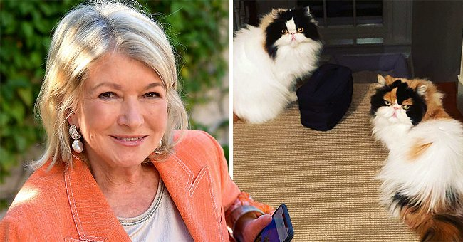 Lifestyle Icon Martha Stewart Reveals Secrets to Being the Best Cat Owner