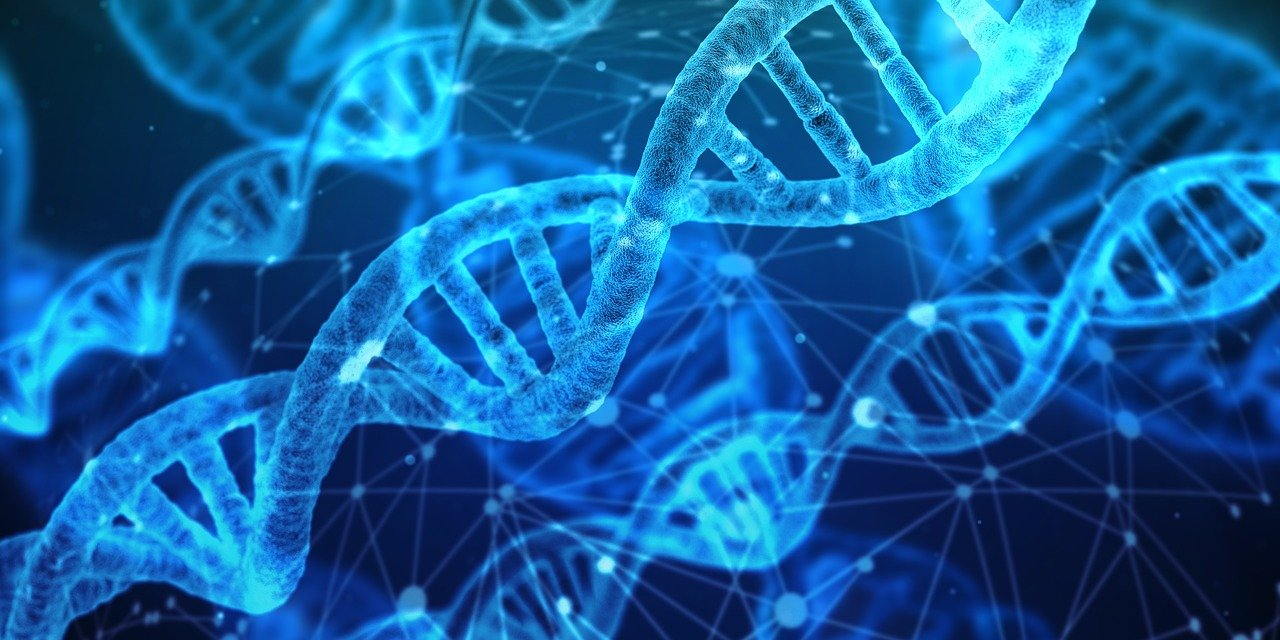An image of DNA under a microscope.   Photo: Pixabay