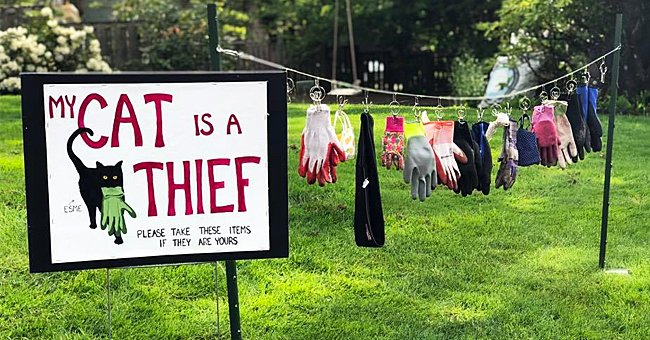 Oregon Mom Displays Items on Her Yard that Her 'Thief' Cat Stole from Neighbors