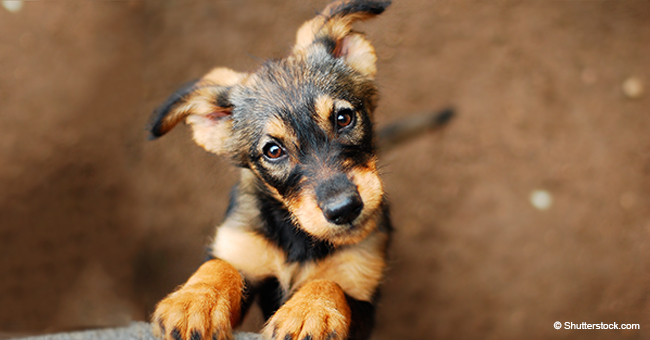 Conmovedor instante en que cachorrito atrapado bajo rocas no puede dejar de besar a su salvador