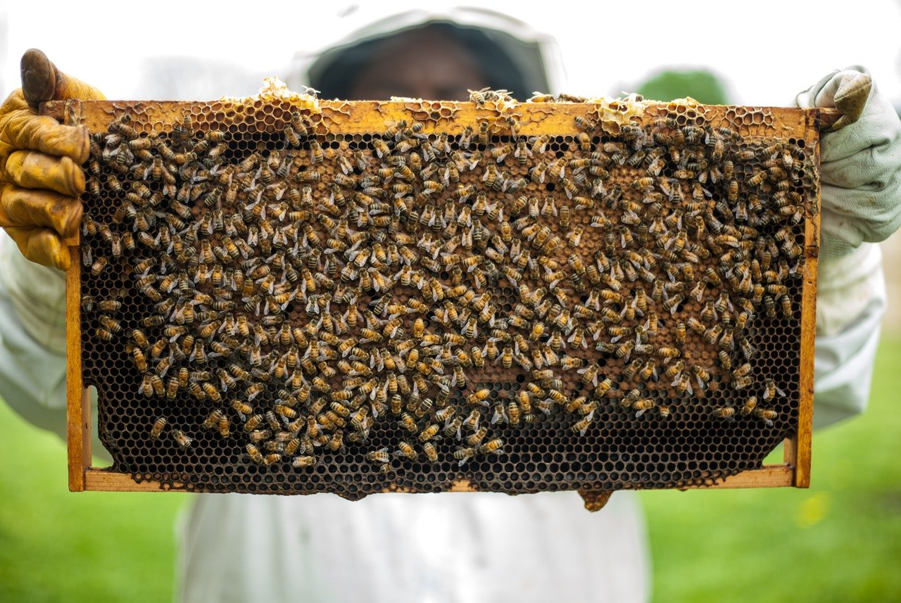 Photo of a swarm of bees | Photo: Pexels