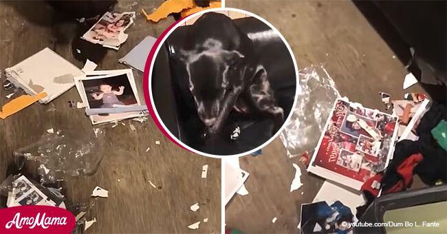 Perro cómicamente intenta hacerse invisible tras destruir álbumes de fotos de dueña