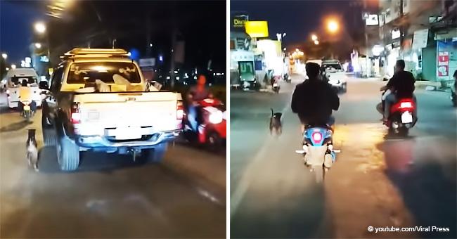 Le moment déchirant où un chien essaye de poursuivre la voiture de son maître après avoir été abandonné dans la rue