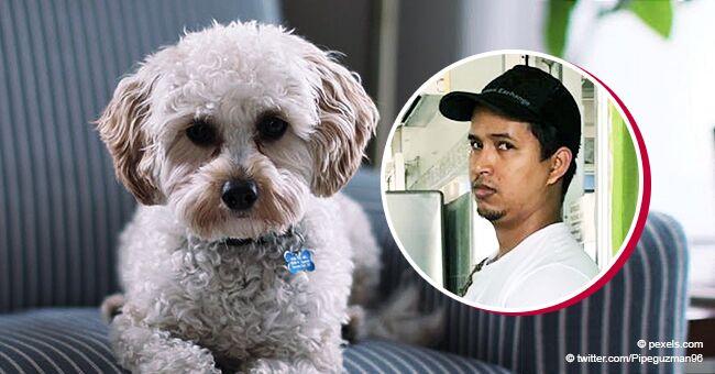 Empleado de veterinaria es atrapado pegándole a un perro que queda inconsciente y debe revivirlo