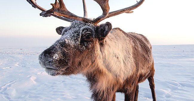 Daily Joke: A Reindeer Walked into a Bar