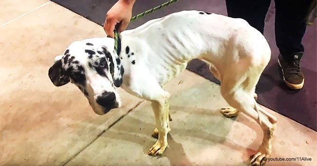 Hundetrainer begeht Selbstmord, nachdem er der Tierquälerei beschuldigt wurde