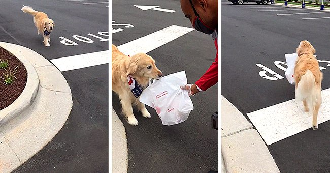 Watch an Amazing Video Showing a Golden Retriever Fetching Chick-Fil-A for Her Owner