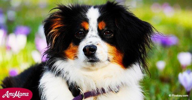 Les races de chiens les plus populaires auprès des Français en 2018