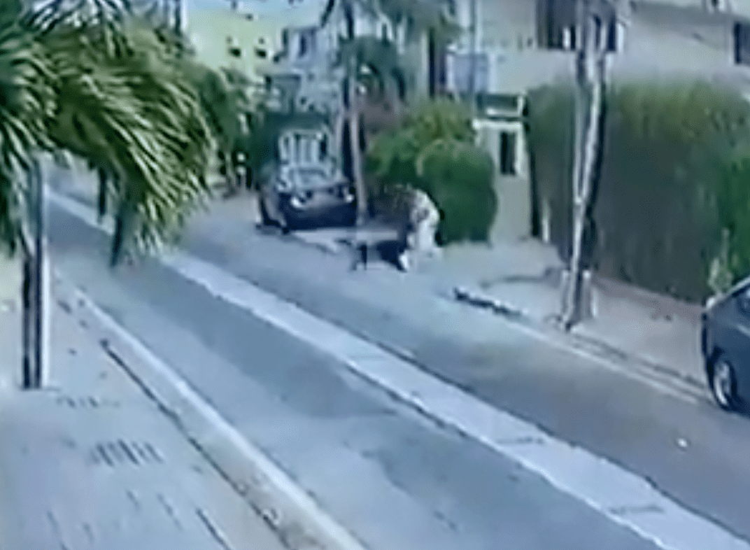 Dogs attack a man who is walking through his neighbourhood   Photo: Twitter/ComicsByMajid