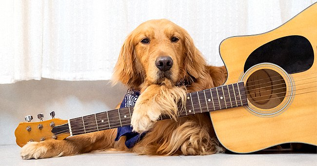 Daily Joke: Man Finally Reveals the Secret of His Band Where Dog Plays Guitar and Cat Sings